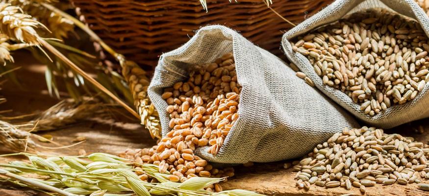 Рецепт самогона из пшеницы без сахара и дрожжей